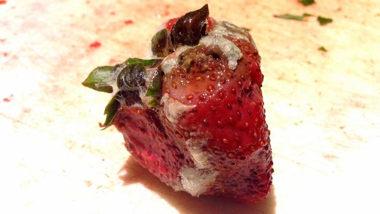 rotten strawberry 2